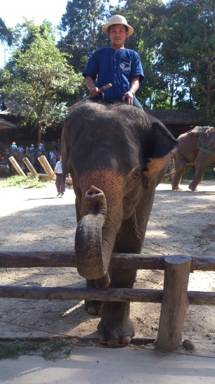Riding an Elephant was one of our goals whilst living in Thailand